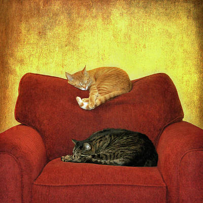 Cats Sleeping On Sofa Art Print by Nancy J. Koch, Pittsburgh, PA