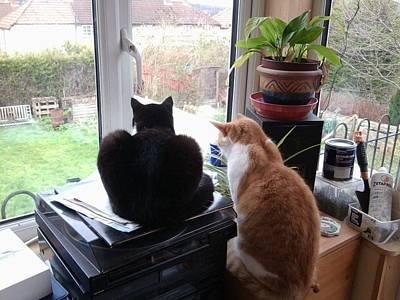 Photograph - Cat's View by Julia Woodman