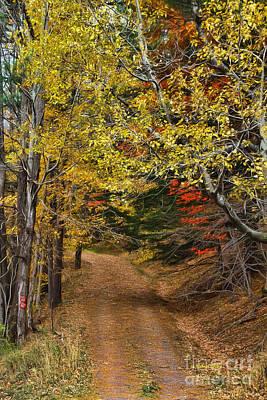 Pine Squirrel Photograph - Catskill Color by Deborah Benoit