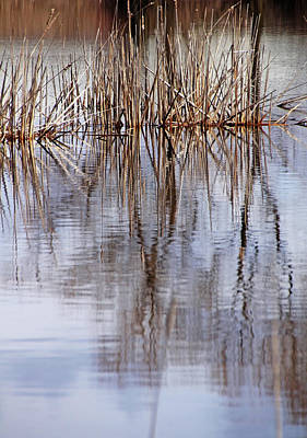 Photograph - Cattail Abstract by Debbie Oppermann