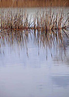 Photograph - Cattail Abstract I by Debbie Oppermann
