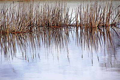 Photograph - Cattail Abstract II by Debbie Oppermann