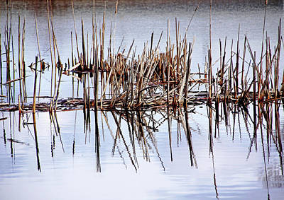 Photograph - Cattail Abstract IIi by Debbie Oppermann