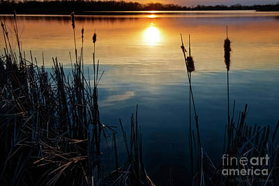 Photograph - Cattail At Sunset by David Arment