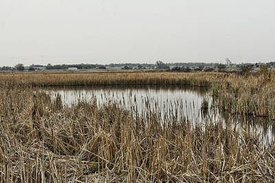 Photograph - Cattail Pond by Jim Bunstock