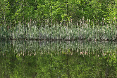 Photograph - Cattail Reflection by Dan Sproul