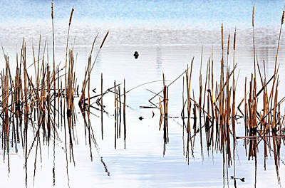 Photograph - Cattail Reflections by Debbie Oppermann