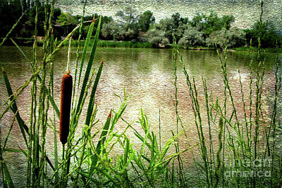 Digital Art - Cattail Reflections by Deborah Nakano