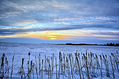 Photograph - Cattail Winter Sunrise by Bonfire Photography