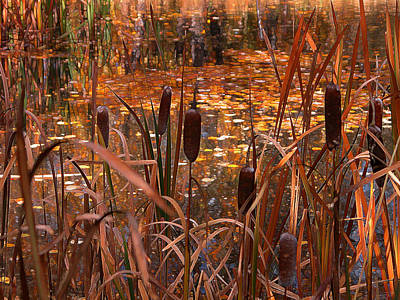 Digital Art - Cattails - Autumn Pond by Stuart Turnbull