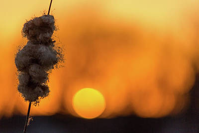 Photograph - Cattails And Sunsets by Penny Meyers