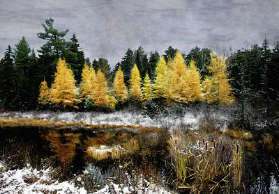Photograph - Cattails And Tamarack Under A Painted Sky by Wayne King