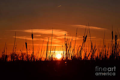 Photograph - Cattails And Twilight by Kathy M Krause