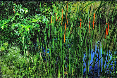Photograph - Cattails by Anna Louise