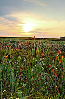 Photograph - Cattails Beans And Corn by Bonfire Photography