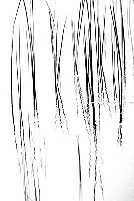 Photograph - Cattails Black And White by Debbie Oppermann