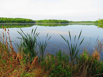Photograph - Cattails By The Lake by MTBobbins Photography
