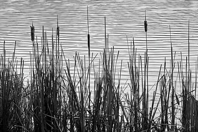 Photograph - Cattails In A Minnesota Marsh by Jim Hughes