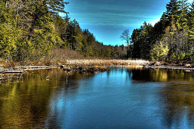 Cattails Photograph - Cattails On The Channel by David Patterson