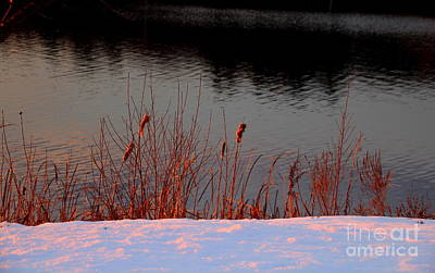 Photograph - Cattails Reflecting Sunset by Lennie Malvone