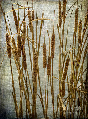 Photograph - Cattails by Tamara Becker