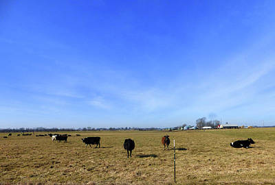 Photograph - Cattle And Blue Skies by Tina M Wenger
