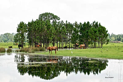 Cattle And Horse Ranch In Florida Art Print by Stephen  Johnson