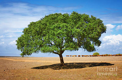 Spring Scenery Photograph - Cattle And Tree by Carlos Caetano