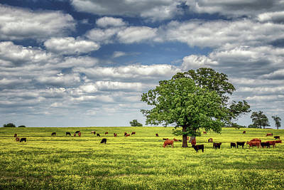 Photograph - Cattle Call by James Barber