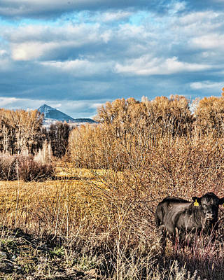 Photograph - Cattle Country by Daniel Hebard
