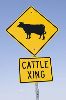 Cow Images Photograph - Cattle Crossing Road Sign by Donald  Erickson