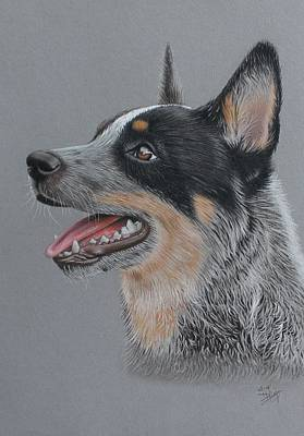 Cattle Dog Drawing - Cattle Dog by Denise Nijs
