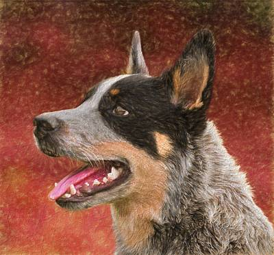 Vet Mixed Media - Cattle Dog On Red by Dan Sproul