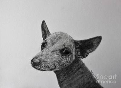 Cattle Dog Drawing - Cattle Dog Ready To Run by Payton VanBeek