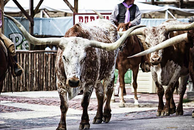 Photograph - Longhorn Cattle Drive  by Roberta Byram
