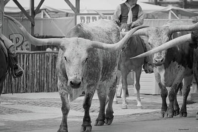 Photograph - Longhorn Cattle Black And White by Roberta Byram