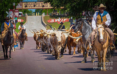Cattle Drive Photograph - Cattle Drive by Inge Johnsson