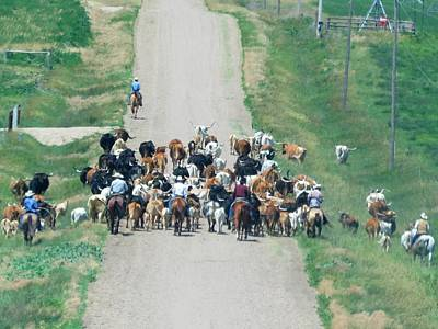 Photograph - Cattle Drive by Keith Stokes