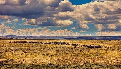 Cattle Drive Photograph - Cattle Drive by L O C