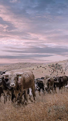 Digital Art - Cattle Drive Triptych 2 by Rick Mosher