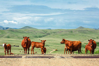 Angus Steer Photograph - Cattle Guards by Todd Klassy