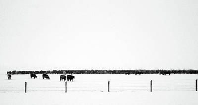 Photograph - Cattle In A Spring Snowstorm by David Pantuso