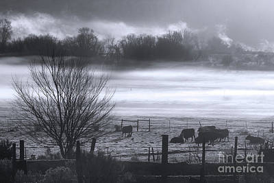 Photograph - Cattle In The Mist by Jim Garrison