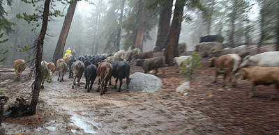 Photograph - Cattle Moving by Diane Bohna