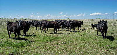Photograph - Cattle by Nathan Hillis