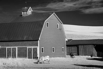 Photograph - Cattle On The Farm by Jon Glaser