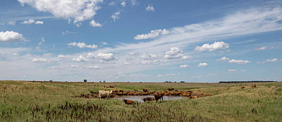 Photograph - Cattle Pond Gathering by Chris Harris