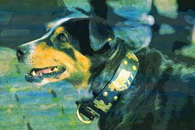 Cattle Dog Digital Art - Cattle Show Dog Appenzeller Bless  by PixBreak Art