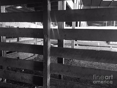 Photograph - Cattle Stall by Robin Lewis
