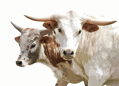 Photograph - Cattle Steers II by Athena Mckinzie